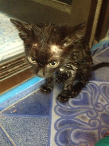 Tiny scrawny kitten after her anti-flea bath.