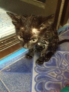 Tiny scrawny kitten after her anti-flea bath.