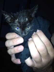 Tiny flea-ridden kitty :(