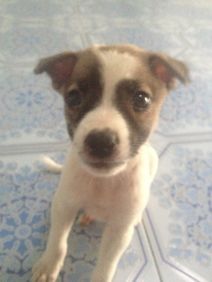 Patches the puppy