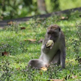 Monkey chill