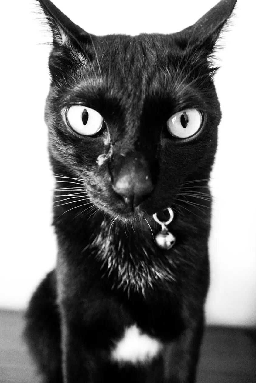 Photo of the day:Cat.