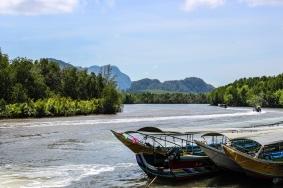 Mangroves on the river